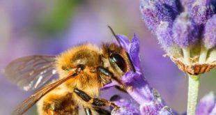 Blumen für den Bienenbalkon: So wird Ihr Zuhause zum Bienenparadies
