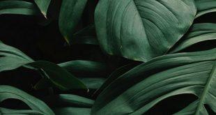 Download Hintergrund 800x1420 Blätter, Pflanze, Grün, Dunkel, Vegetation iphone se / 5s / ...