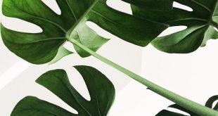 Druckbare Wandkunst, Monstera Leaf Print druckbare Kunst, Wanddekoration, Inneneinrichtungen, Kunstdruck Monstera Deliciosa Leaf Print Boho Decor Digital