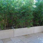 Ende 2011, als ich einen Pflanzenschutz zwischen unserem Terrassenbereich und unserem ne gepflanzt habe