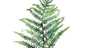 """Farn-Druck - hergestellt von meinem ursprünglichen Farn-Anstrich """"Farn-Studie 2"""", Farn, botanischer Druck, Aquarell-Farn, Farn-Anstrich, Grün, Waldland"""