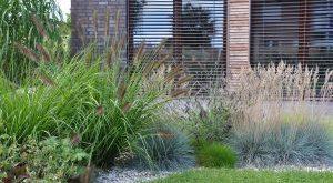 Grass Garden - Nicht einmal 1 Jahr nach dem Pflanzen!
