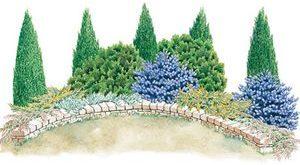 Immergrüner Bildschirm-Garten-Plan