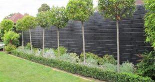 Lorbeerbäume - Lieben Sie grüne Einfachheit im Garten mit Topiary! - Gartenarbeit und Li