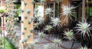 Luftpflanze Bildschirm