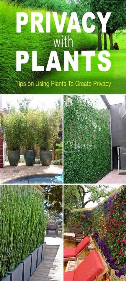 Neue Backyard Privacy Plants-Bildschirme - Ideen