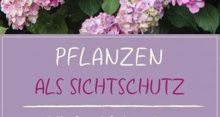 Pflanzen als Privatsphäre: Unsere Top 15 für Garten & Balkon