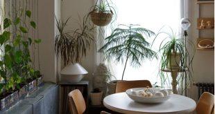 Philodendron, der Ketten als Raumteiler heranwächst. Ziemlich. Über Gartengestaltung