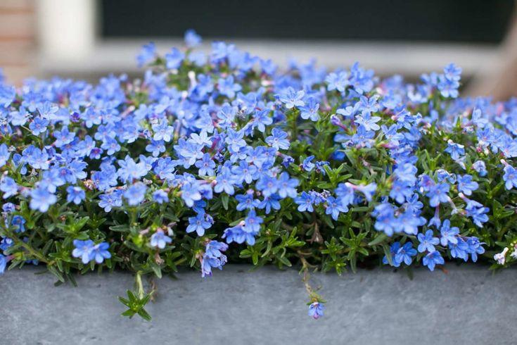 Schattenpflanzen: 16 Pflanzen für den Schatten in Ihrem Garten