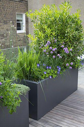 Seitenhaus - Westbourne Park - Emma Griffin Garden Design