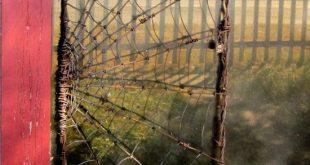 Spinne, die ein Netz-Stacheldraht-Garten-Gitter herstellt, um zu bestellen