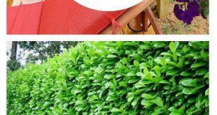 10 Pflanzen, die perfekt für die Privatsphäre im Freien geeignet sind
