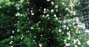 14 Blumen, die den Garten verzaubern, ohne zu arbeiten - DIY-Ideen