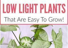 20 Zimmerpflanzen mit wenig Licht, die leicht zu züchten sind