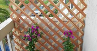 25 Gärten, an die Sie noch nicht gedacht haben - Phyllis Falcorn