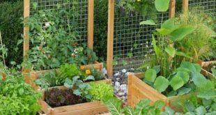 42 Einfacher DIY-Projektgarten für alle Sommerbedürfnisse #einfach #Projekt ...