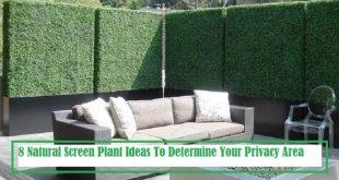 8 Natural Screen Plant-Ideen zur Bestimmung eines größeren Datenschutzbereichs