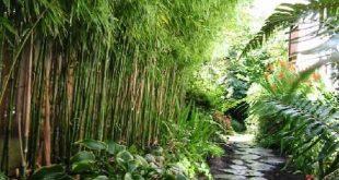 Bambus zum Screenen. Schöne Wohnideen Ideen #backYardIdeas #DIYPlants #Outdoo ...