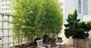 Bambuspflanzen Balkon Ideen