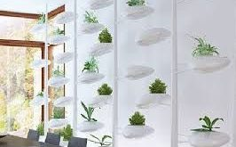 Bildergebnis für Bildschirmideen für Zimmerpflanzen