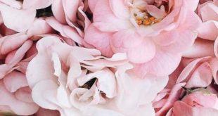 Blumen | floral | blüht | Blumenstrauß Blumenstrauß | Schnittblumen | DR...