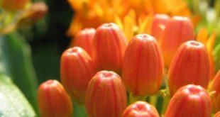 Die Art der Pflanzen-Screening im Rahmen der Sustainable Living-Serie, Carbond ...