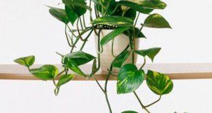 Gemeinsame Zimmerpflanzen
