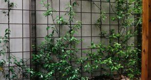 Gitterrost für Kletterpflanzen. An Gartenmauern befestigte Zäune
