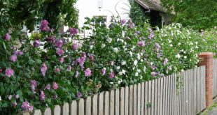 Hibiskushecke: Tipps zum Anpflanzen und Pflegen