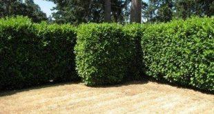 Kreatives Screening mit Pflanzen: Gute Grenzen machen gute Nachbarn