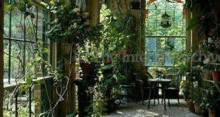 Oh, um mein eigenes Gewächshaus zu haben, dieses wunderschöne Gewächshaus für den Wintergarten