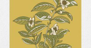 Tea Plant Botanical 11 x 14 Siebdruck Einige der besten Dinge im Leben kommen von ...