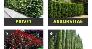 Top 10 schöne Pflanzen, die Sie anstelle eines Zauns wachsen können
