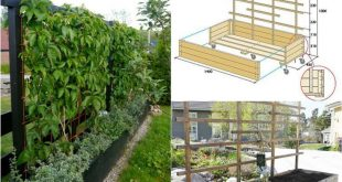 Welche Pflanzen als Sichtschutz für Garten und Terrasse? - Tipps und Typen
