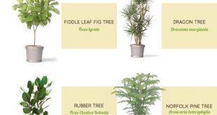 Wie man ohne Garten arbeitet - Die besten Zimmerpflanzen