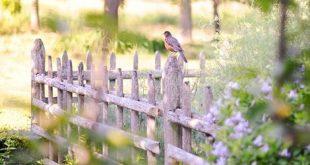 Wunderschöner Garten in einem historischen Haus Ein überwuchertes Tudor-Haus und Garten ist großartig ...
