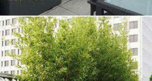 Bester Garten oder Hof mit Pflanzen Ideen