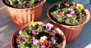 Blumentöpfe pflanzen 101 · Jillee