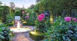 Brunnen als besonderer Blickfang Heckenpflanzen-Pfingstrose