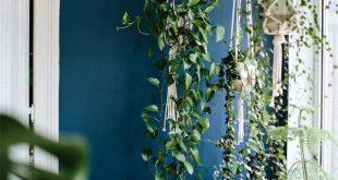 Die besten Hängepflanzen für Anfänger (die auch toll aussehen)