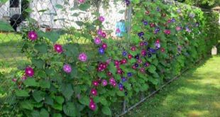 Fügen Sie Ihrem Garten oder Garten mit Pflanzen Privatsphäre hinzu