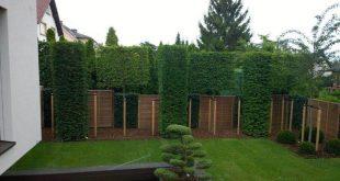 Gitterbäume, Säulenbäume fällen, meterweise absichern