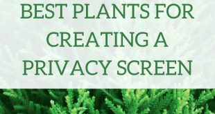 Möchten Sie mehr Privatsphäre in Ihrem Garten schaffen? Erwägen Sie, eine dieser Pl ...