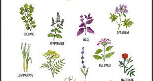 Mückenschutzpflanzen: 25 Pflanzen, die Mücken natürlich abwehren!