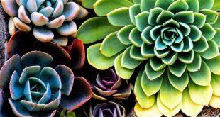 Perk Steigern Sie Ihren Garten mit diesen praktischen Tipps - #Garden #Handy #increase #Perk ...