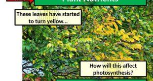 Pflanzliche Mineralien und Mängel - Aktivieren