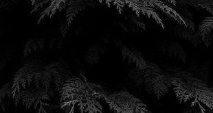 Schwarze Pflanzen # Tapete #Lockscreen