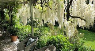 """Simon Rickard auf Instagram: """"Was für ein Ort, um mit meinen @ botanicatravel-Gästen einen Nachmittagstee zu genießen! Auf der geräumigen Veranda von @ barewoodgarden unter ... - Claire Vicars"""