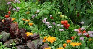 Züchte 10 Blumen mit Gemüse. Companion Planting: Wie Schädlinge und E