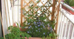 windschutz balkon spalier blütensträucher kletterpflanzen